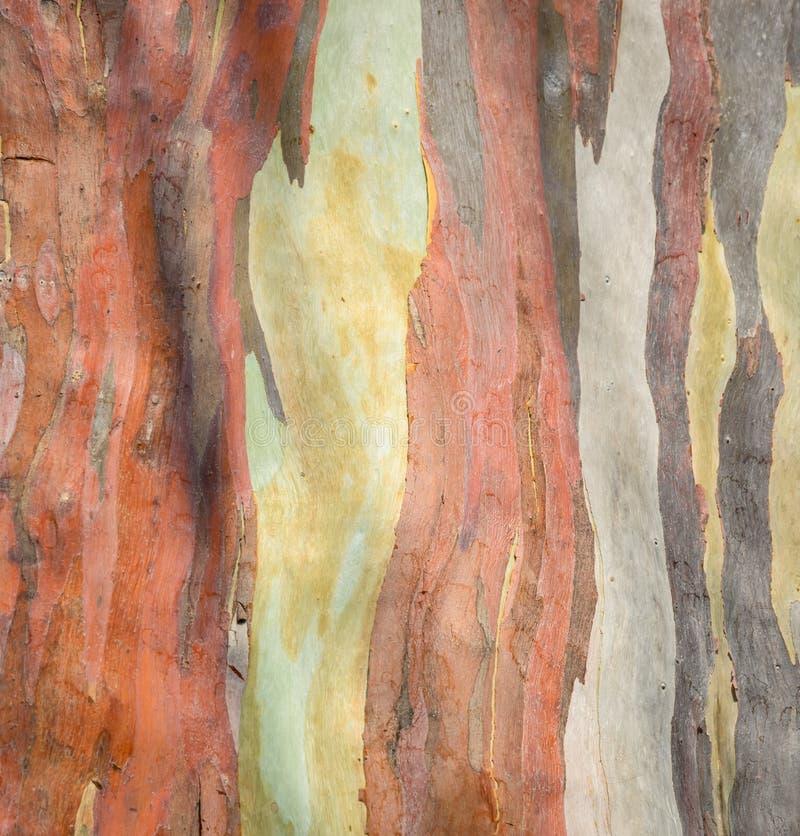 Fundo colorido da casca de árvore fotografia de stock