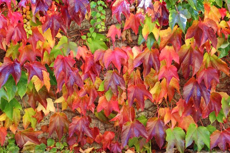 Fundo colorido da folha do outono fotos de stock