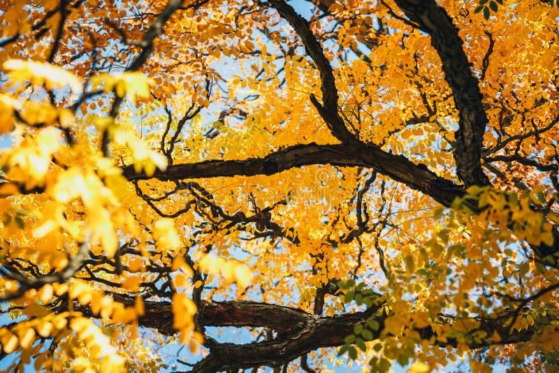 Fundo colorido da folha do outono imagens de stock royalty free