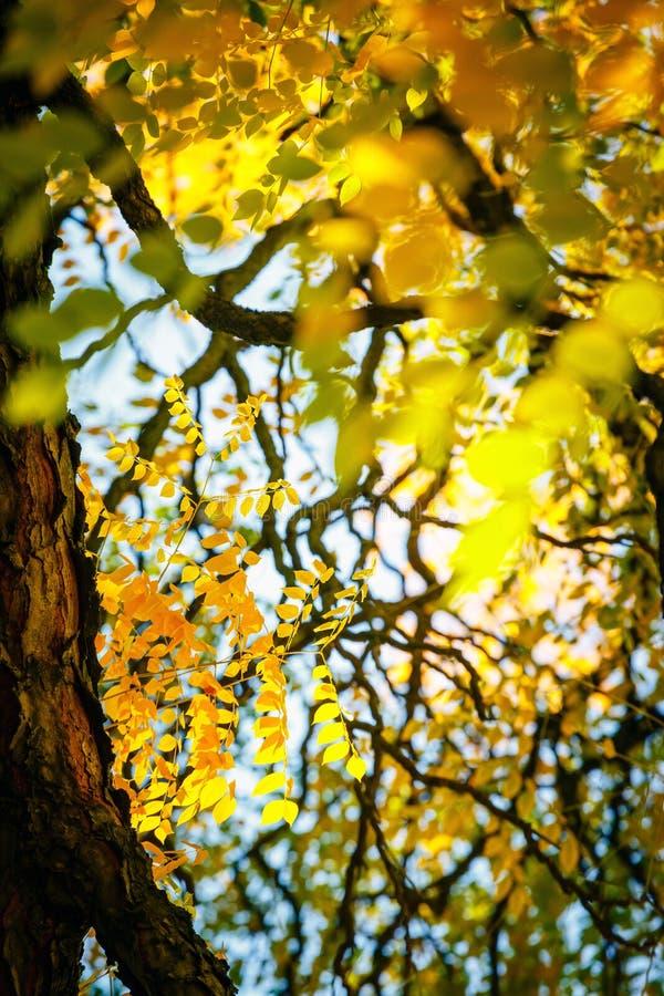 Fundo colorido da folha do outono imagem de stock royalty free