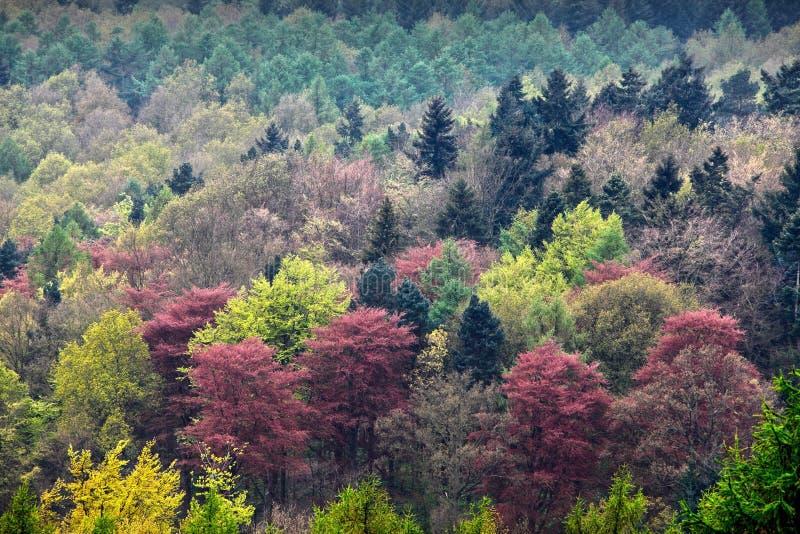 Fundo colorido das árvores imagem de stock