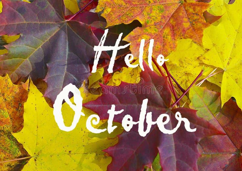 Fundo colorido das folhas de bordo com texto olá! outubro Conceito do outono ou do outono imagens de stock