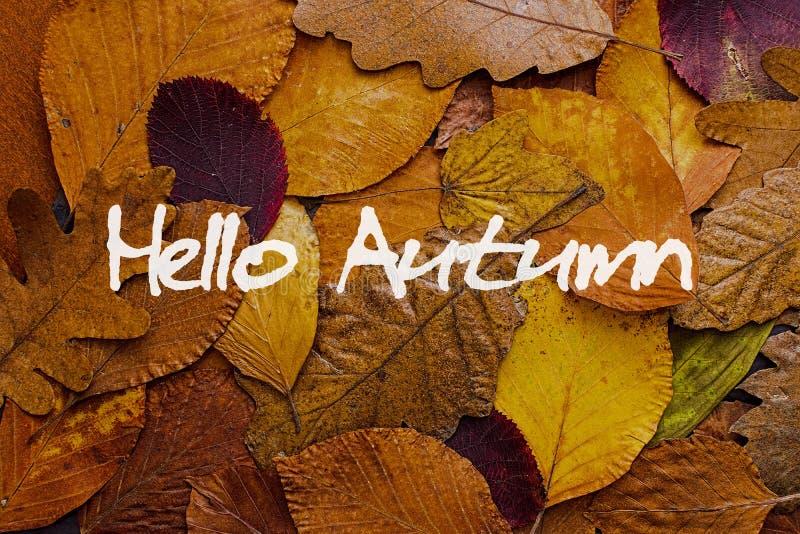 Fundo colorido das folhas de outono Olá! Autumn Concept Wallpaper imagens de stock royalty free