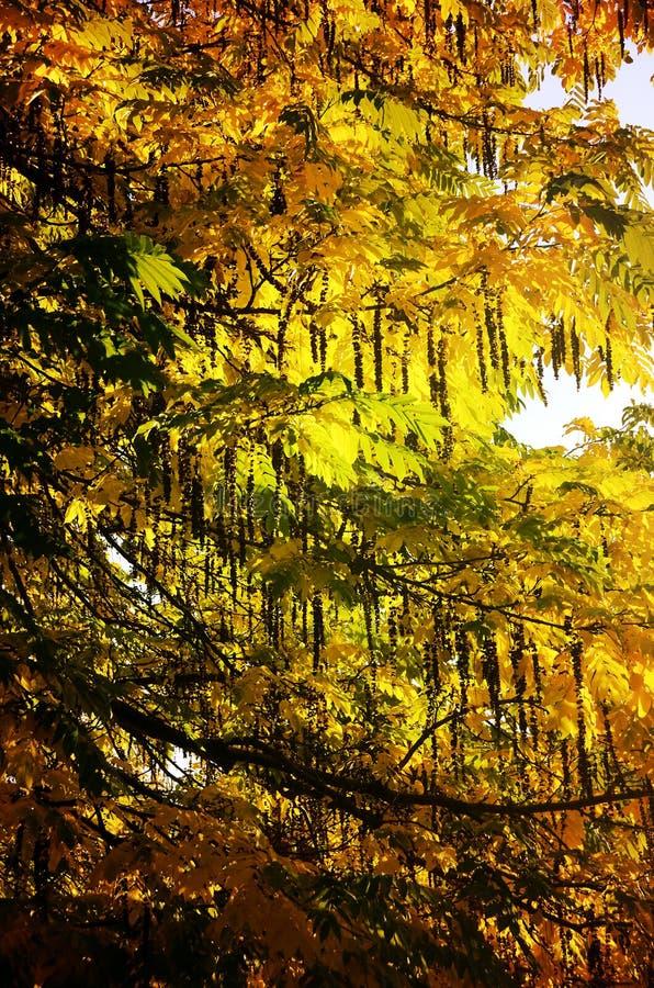 Fundo colorido das folhas do outono foto de stock