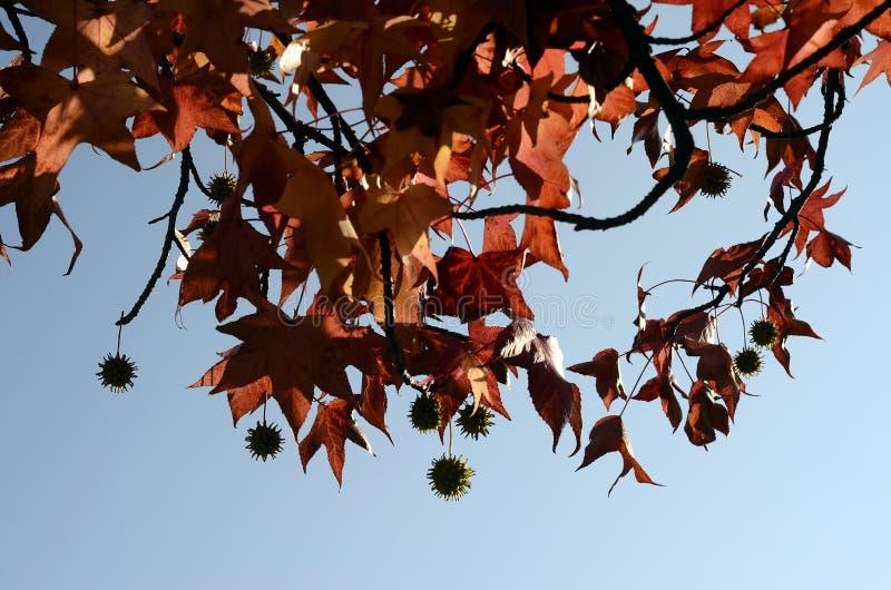 Fundo colorido das folhas do outono fotos de stock