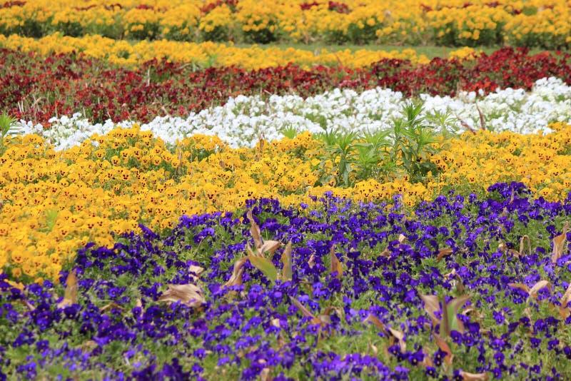 Fundo colorido pequeno das flores fotos de stock royalty free