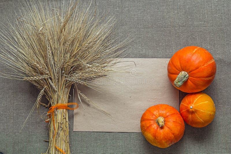 Fundo com abóboras e orelhas do trigo na serapilheira Agricultur fotos de stock royalty free