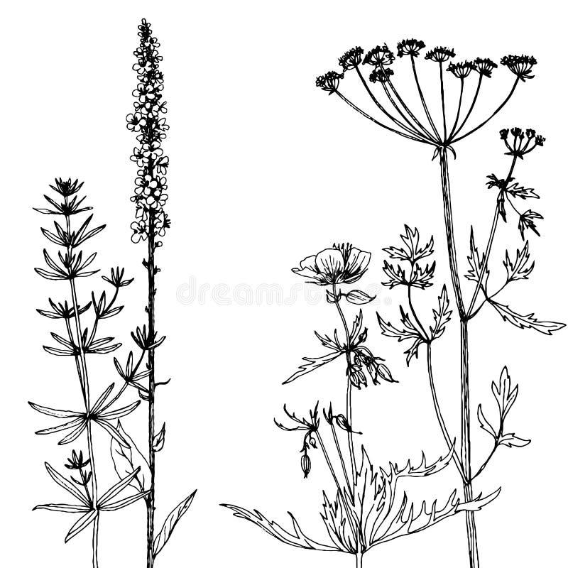 Fundo com as ervas e as flores do desenho da tinta ilustração stock