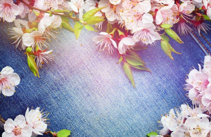 Fundo com as flores da flor da mola Fundo das calças de brim com flo imagens de stock