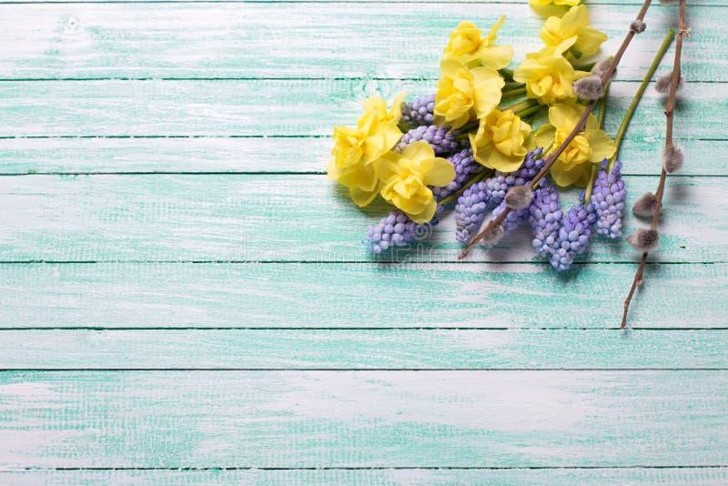 Fundo com as flores frescas da mola e o bichano amarelos e azuis w imagem de stock royalty free