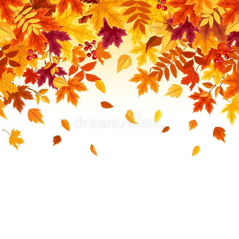 Fundo com as folhas de outono de queda coloridas Ilustração do vetor ilustração royalty free