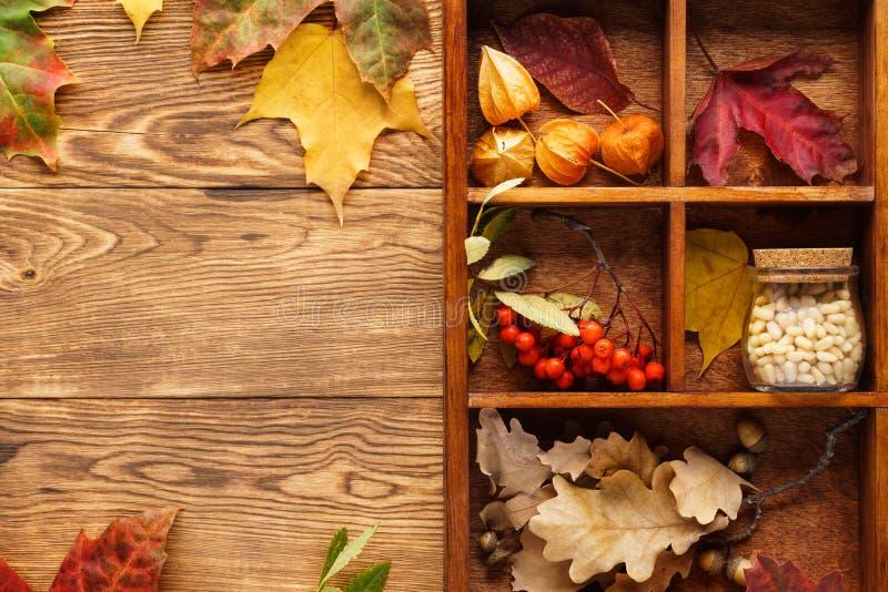 Fundo com as folhas, as porcas e as bagas vermelhas e amarelas em uma caixa foto de stock