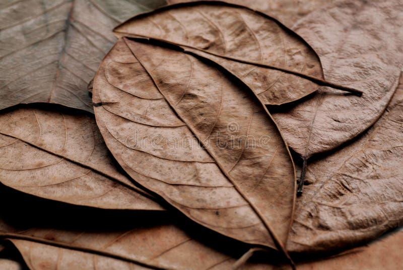 Fundo com as folhas secadas das linhas naturais da floresta de folha da planta Textura de muitas peças secas da árvore foto de stock royalty free