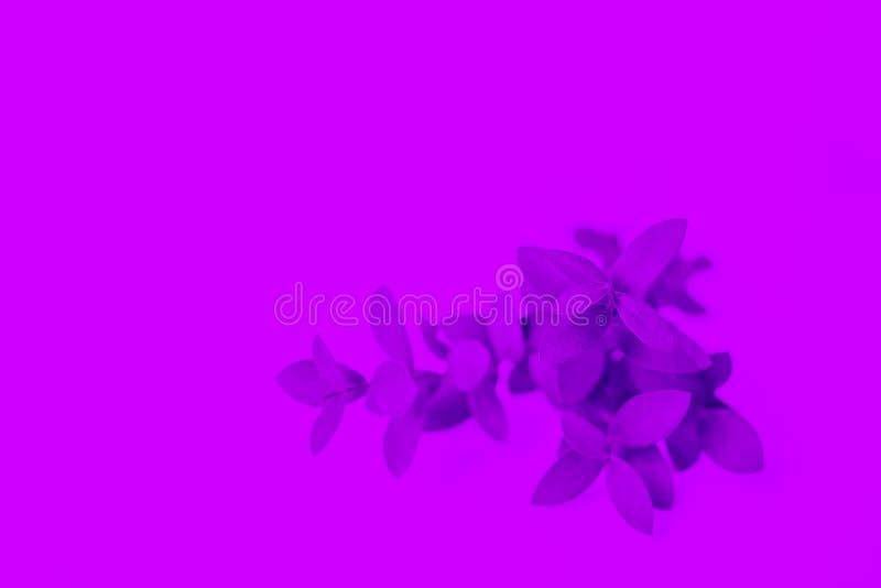 Fundo com cores de n?on Luz ultravioleta fotografia de stock