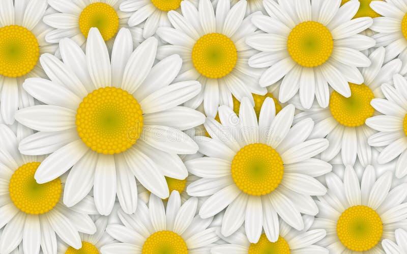 Fundo com flores brancas ilustração royalty free