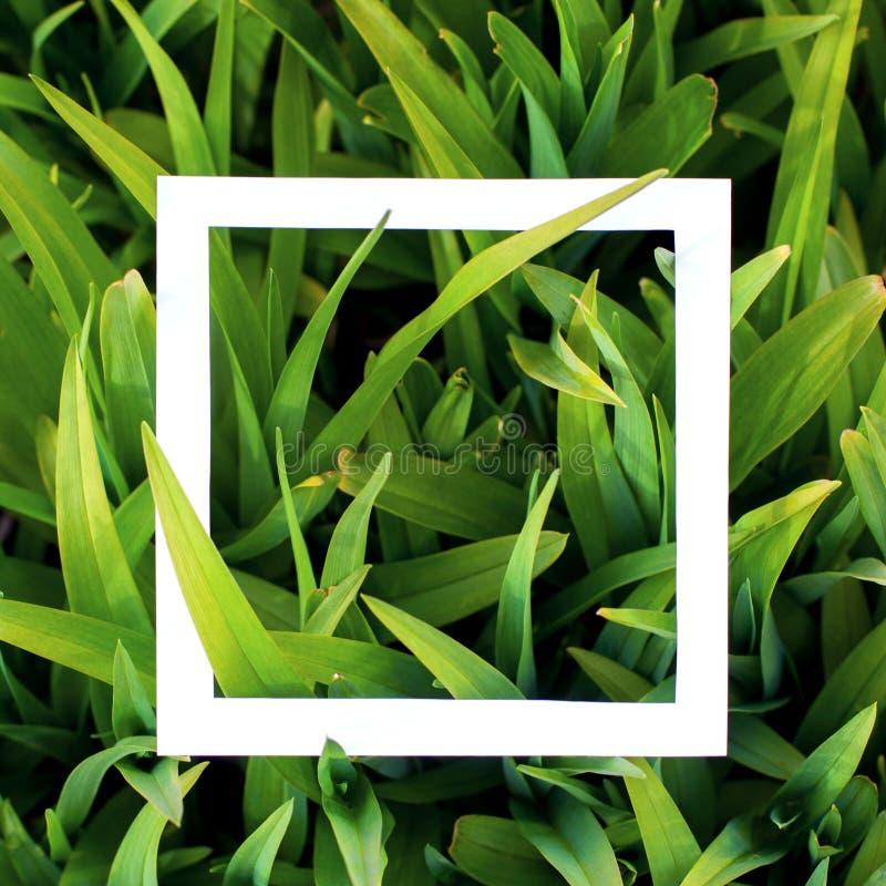 Fundo com grama verde e quadro branco O conceito de projeto material, zomba acima foto de stock royalty free
