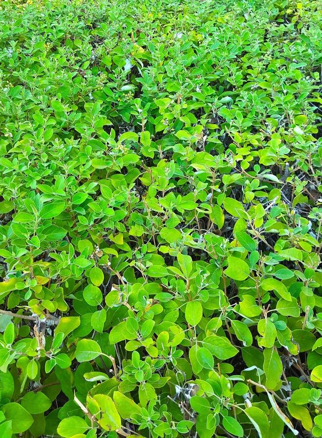 Fundo com a grama verde que cresce em um gramado em um parque da cidade, iluminado brilhantemente pelo sol imagem de stock