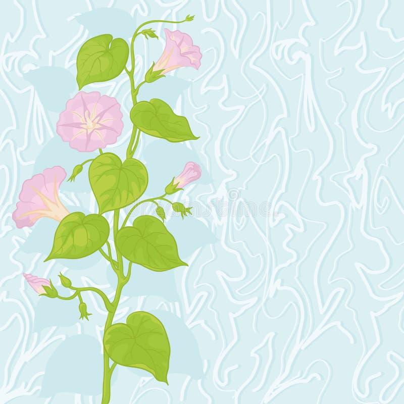 Fundo com Ipomoea das flores ilustração do vetor