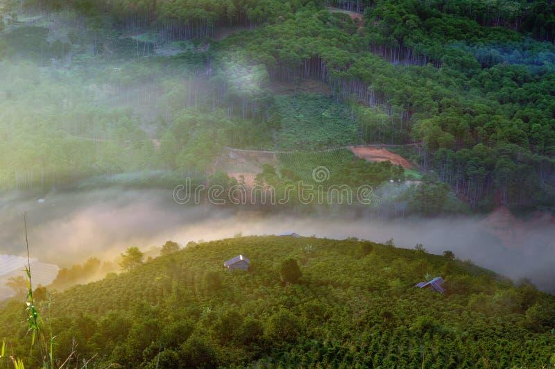 Fundo com névoa densa e luz mágica no nascer do sol A exploração agrícola do café e as casas pequenas na parte brilhante 11 da lu imagens de stock