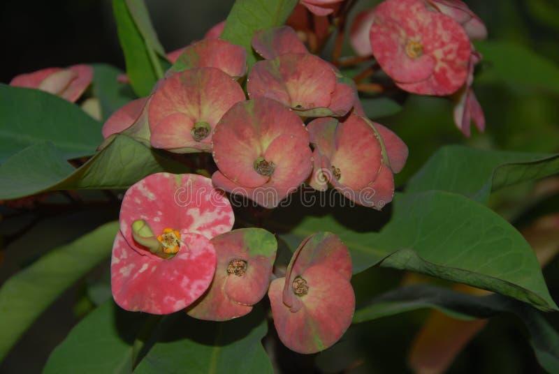 Fundo com natureza do estilo da flor fotos de stock