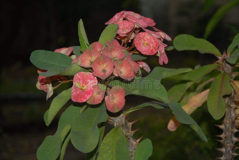 Fundo com natureza do estilo da flor foto de stock