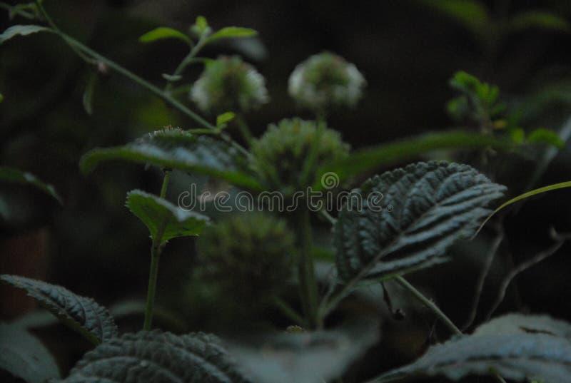Fundo com natureza do estilo da flor imagens de stock royalty free