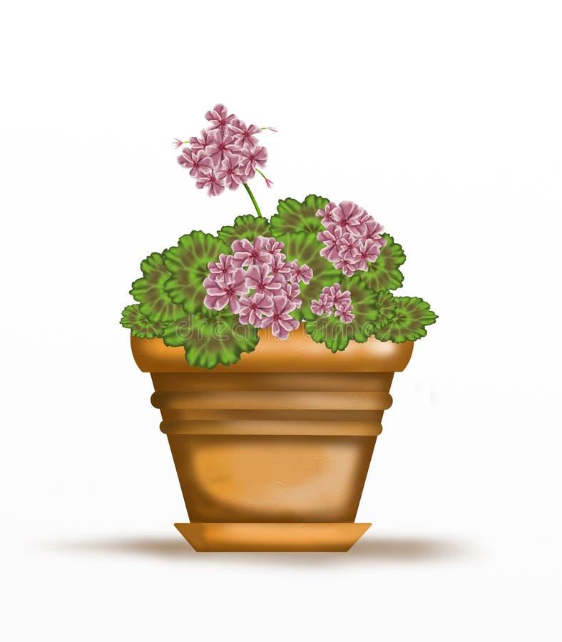 Download Gerânio De Rosa No Potenciômetro Ilustração Stock - Ilustração de geranium, perennial: 29848866