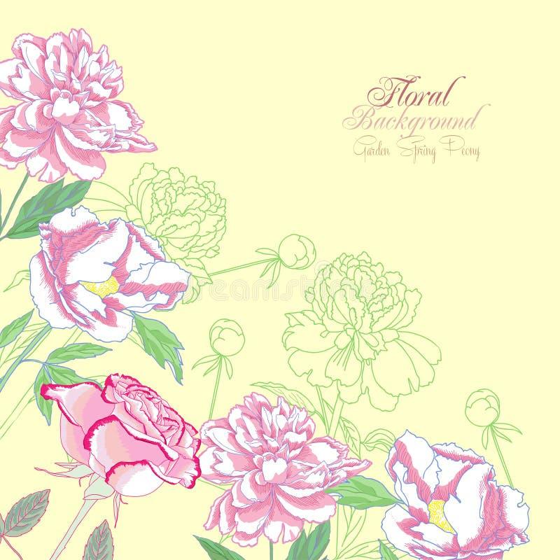 Fundo com peônias e o rose-01 cor-de-rosa ilustração stock