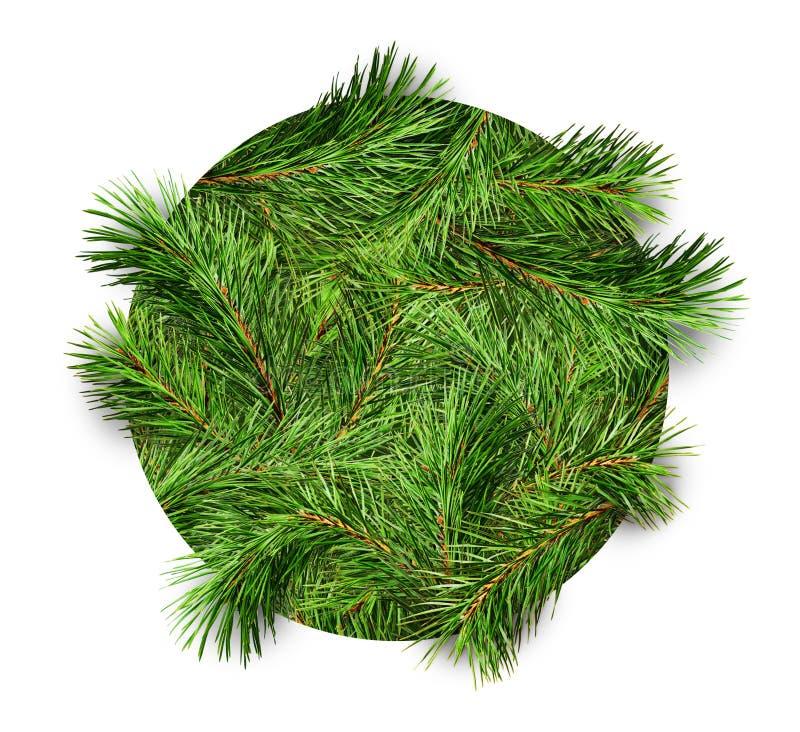 Fundo com ramos de pinheiro em um círculo imagens de stock