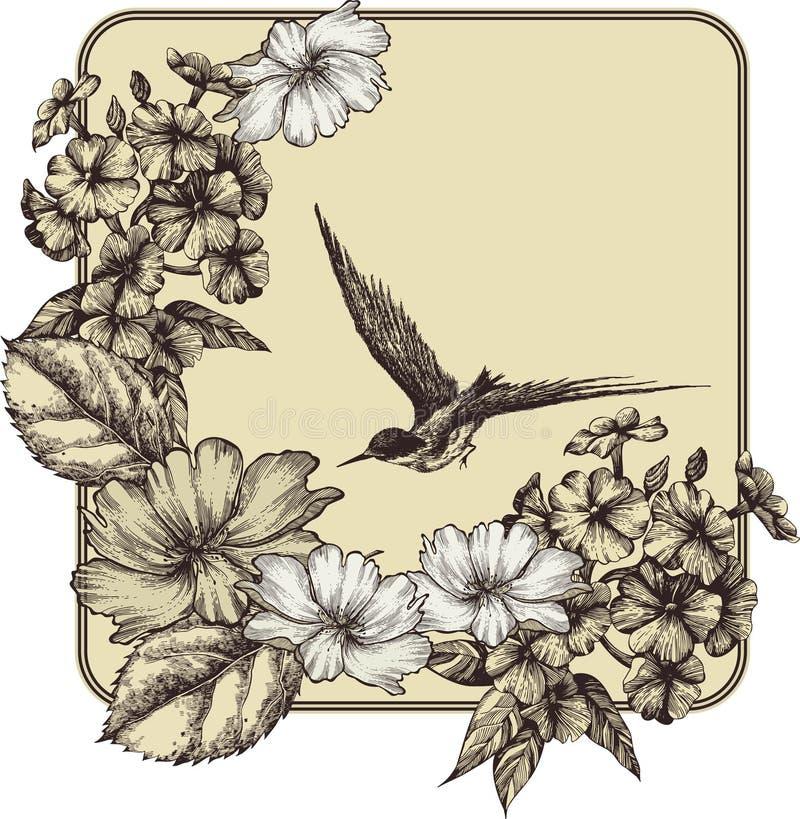 Fundo com rosas de florescência, phlox e um vôo ilustração stock