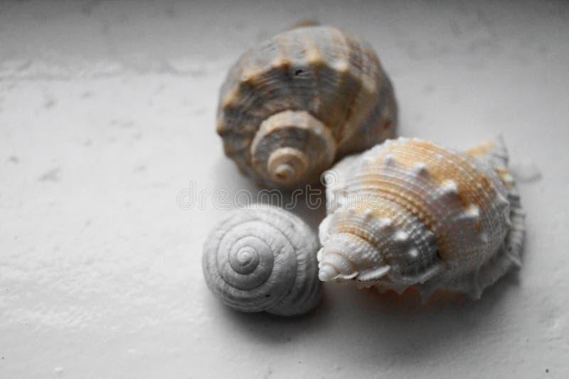 Fundo com shell coloridos imagens de stock
