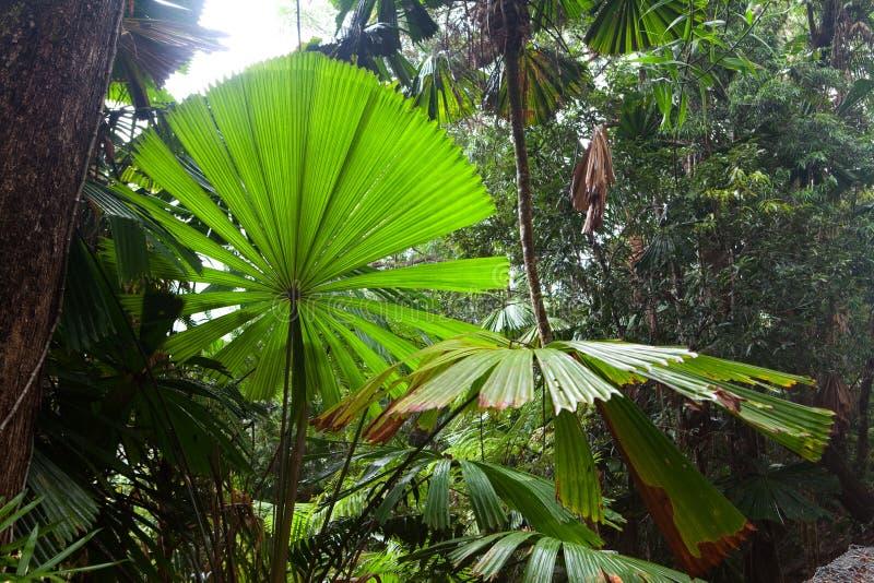 Fundo como novo tropical da floresta tropical imagens de stock