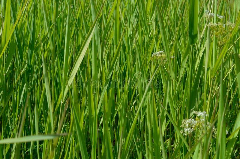 Fundo completo do quadro da foto macro bonita da grama verde imagens de stock royalty free