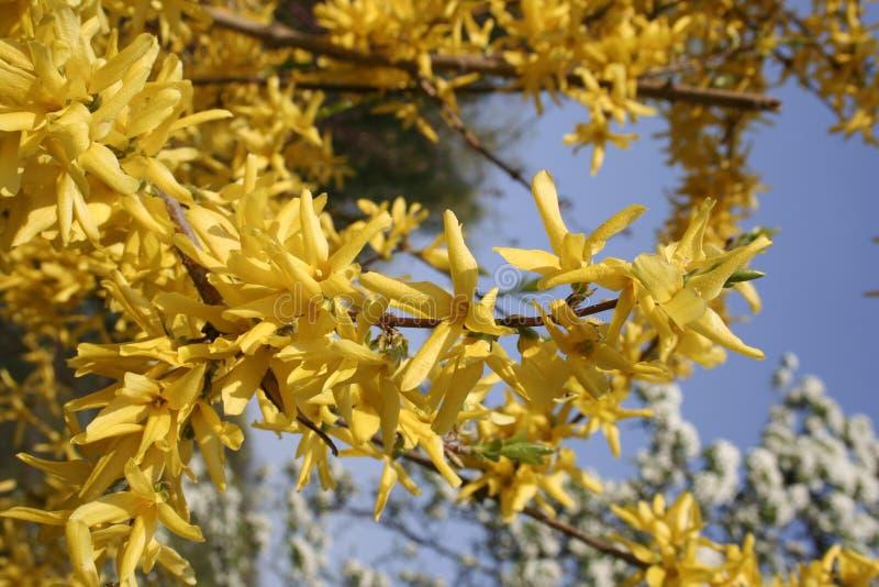Fundo composto de ramos e das folhas verdes imagens de stock royalty free