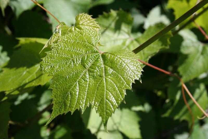 Fundo composto de ramos e das folhas verdes imagens de stock