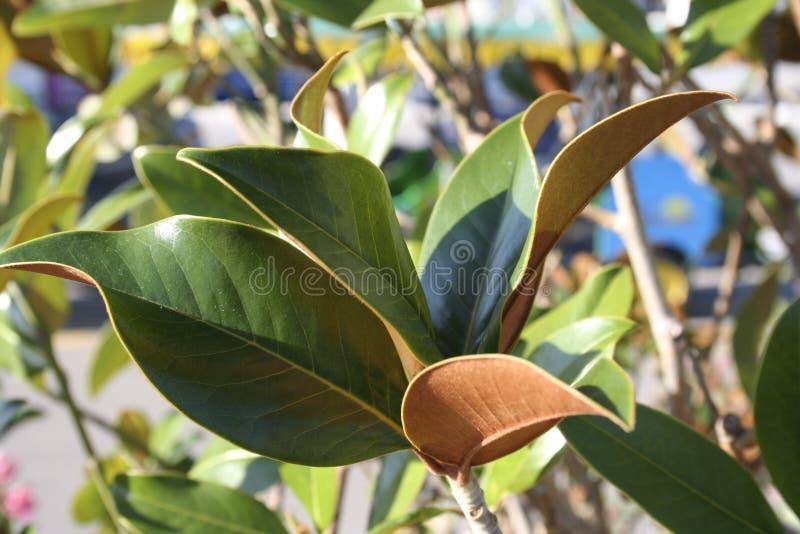 Fundo composto de ramos e das folhas verdes foto de stock