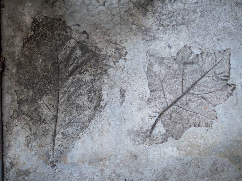 Fundo concreto da textura do selo da folha, assoalho do cimento com teste padrão da folha imagem de stock royalty free