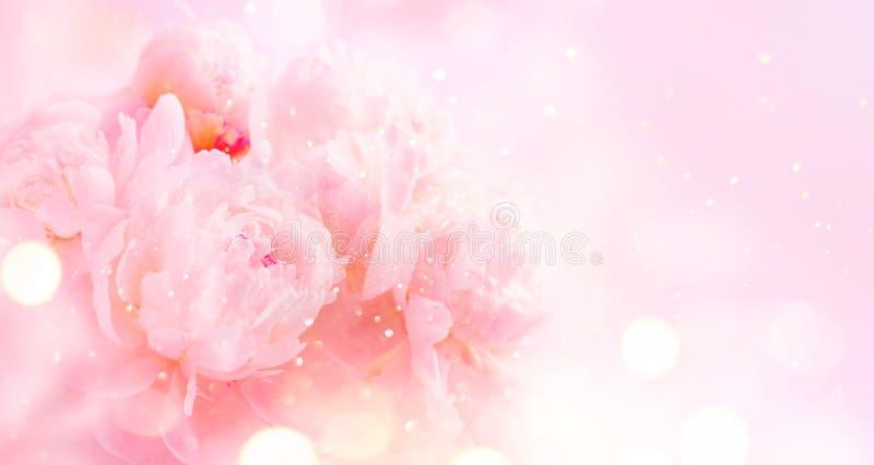 Fundo cor-de-rosa bonito da arte do ramalhete da peônia Projeto de cartão pastel de florescência das flores da peônia ou da beira imagem de stock royalty free