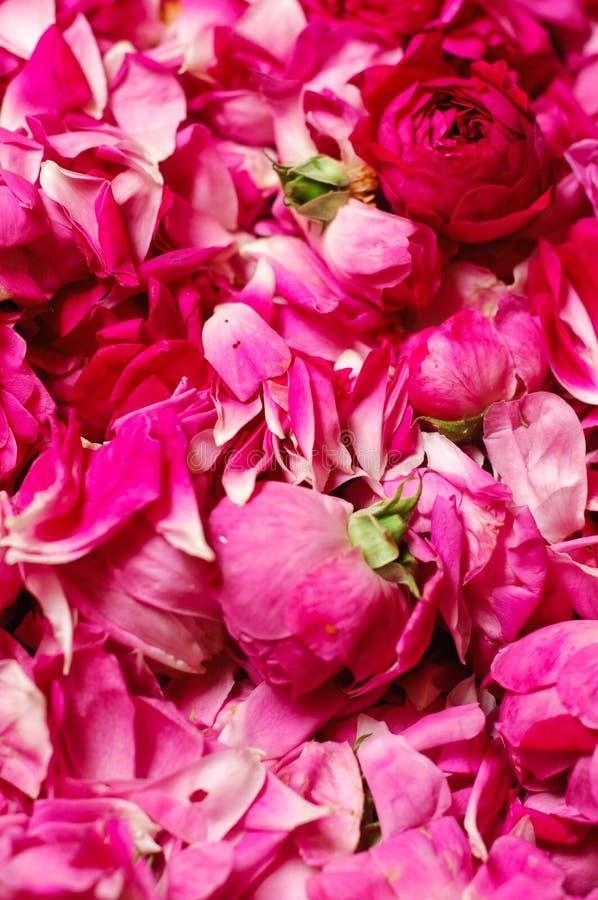 Fundo cor-de-rosa das rosas do Confiture foto de stock royalty free