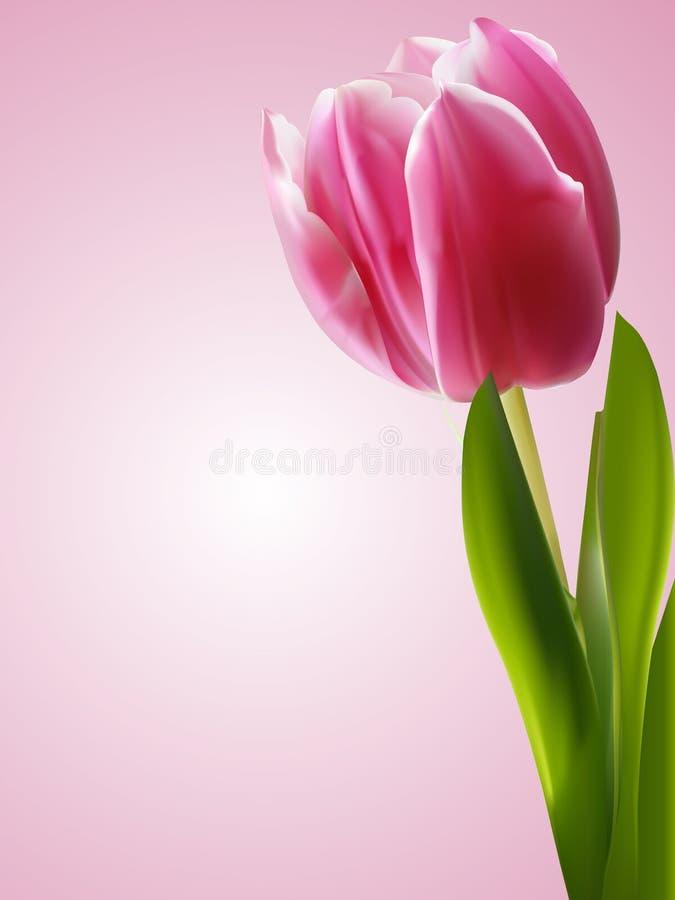 Fundo cor-de-rosa do tulip ilustração royalty free