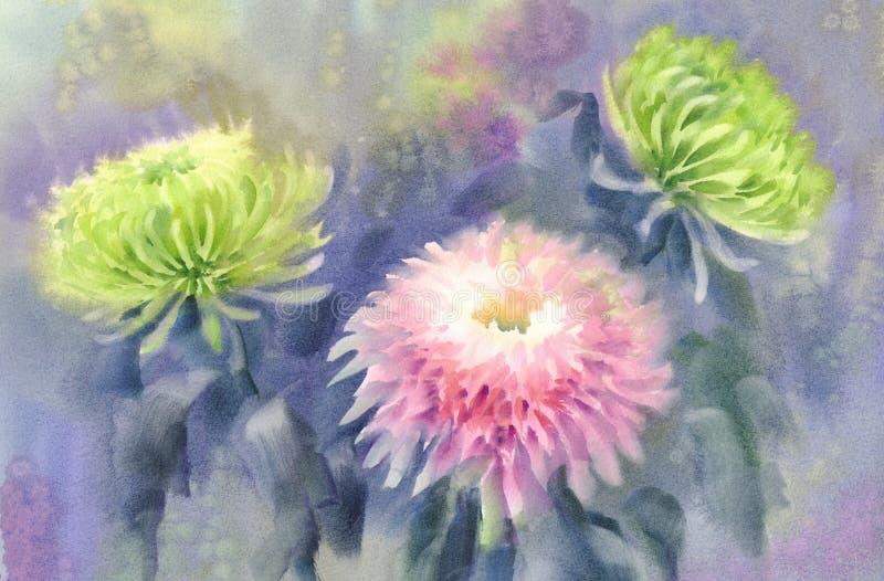Fundo cor-de-rosa e verde da aquarela do crisântemo ilustração do vetor