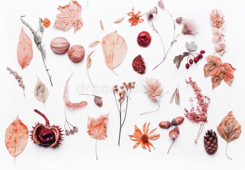 Fundo criativo das folhas secas amarelas, bolota, noz, flores Conceito do outono ?rvore congelada sozinha foto de stock royalty free