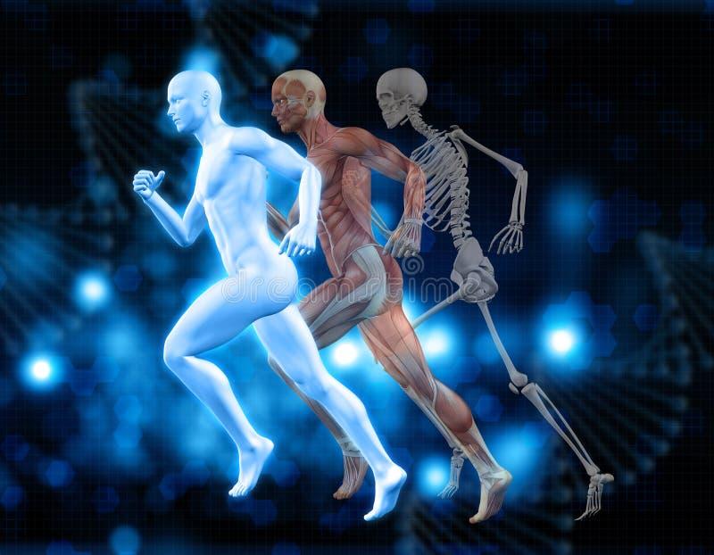 fundo 3D médico com figura masculina na pose de corrida ilustração royalty free