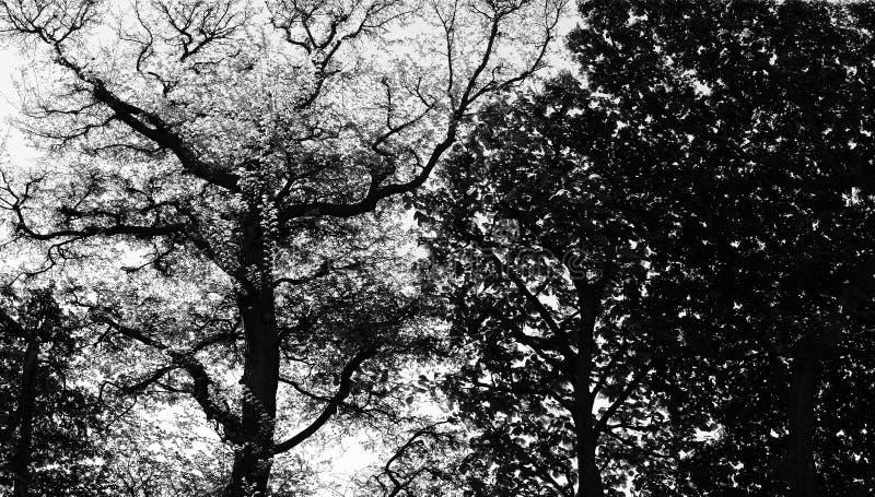 Fundo da árvore foto de stock royalty free