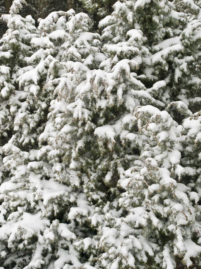 Fundo da árvore da neve imagem de stock