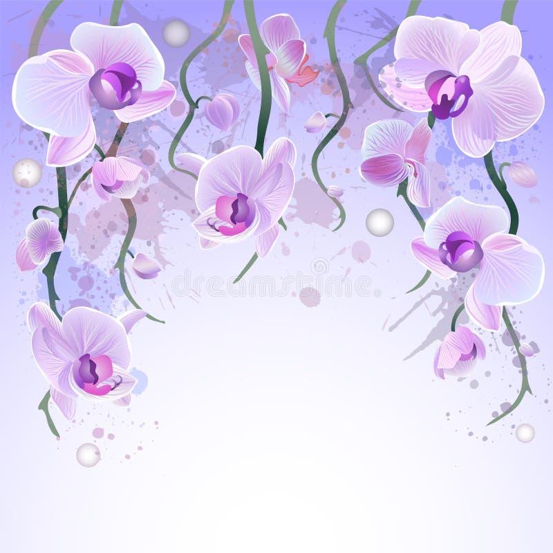 Fundo da aquarela do vetor com orquídeas ilustração do vetor