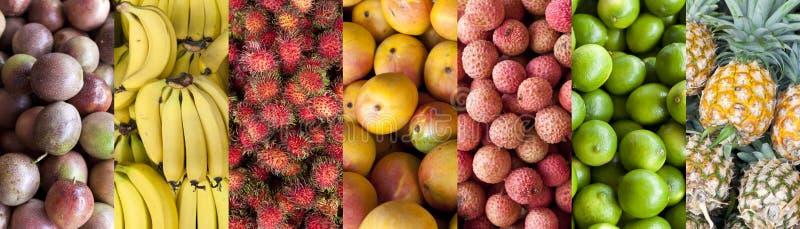Fundo da bandeira do alimento do fruto tropical imagem de stock
