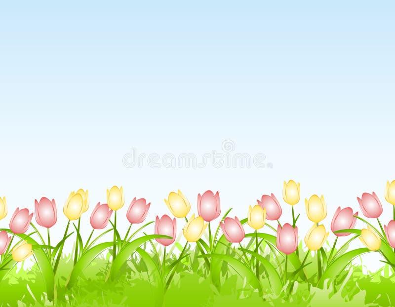 Fundo da beira da flor dos Tulips da mola ilustração do vetor