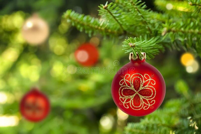 Fundo da bola vermelha do Natal no abeto imagens de stock royalty free
