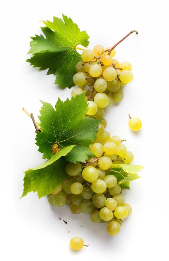 Fundo da carta de vinhos; uvas brancas e folha doces fotografia de stock